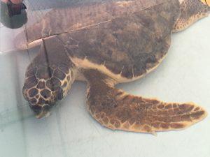 ospedale delle tartarughe Riccione MammaInViaggio