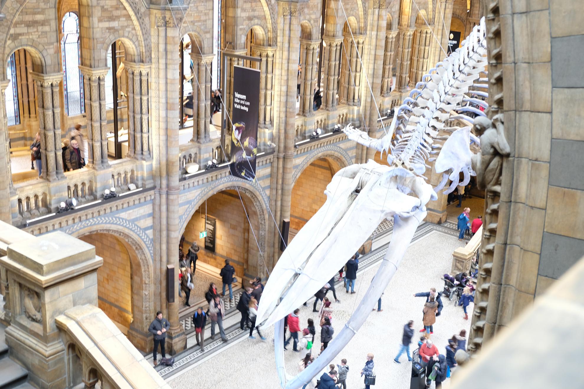 Una mattinata al museo, il Natural History Museum di Londra