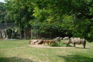 Parco Faunistico Natura Viva MammaInViaggio