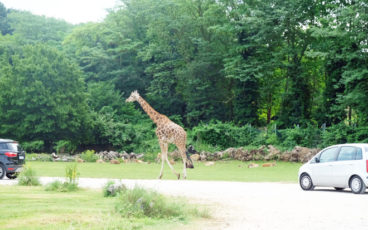 Safari Park Natura Viva