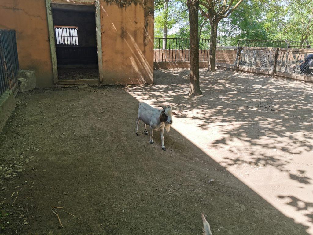 Parco Sigurtà fattoria didattica
