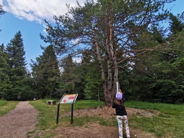 Altopiano di Pradel trekking alla ricerca di Sciury
